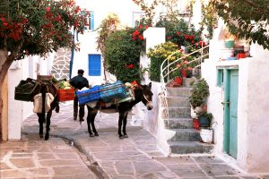 Traditional Paros sights for Yria Island Hotel guests can include donkeys in town & village streets